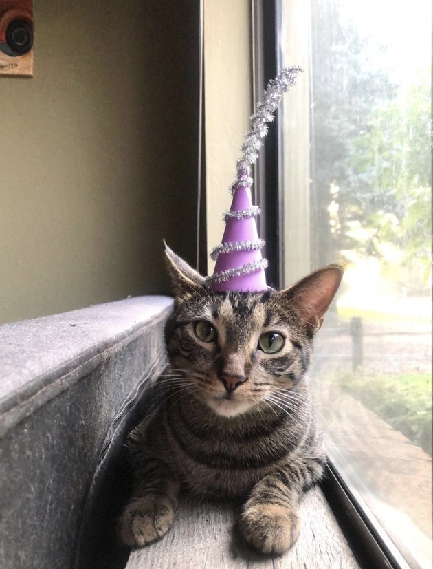 cat in princess hat