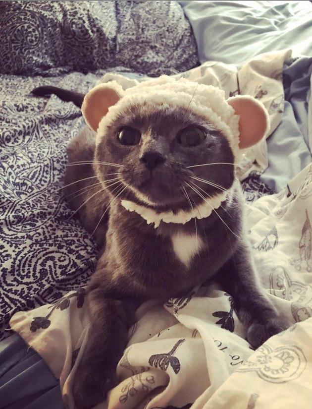 kitten in knit hat