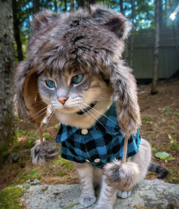 cat in fur hat