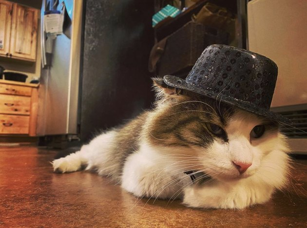 cat in sequined fedora