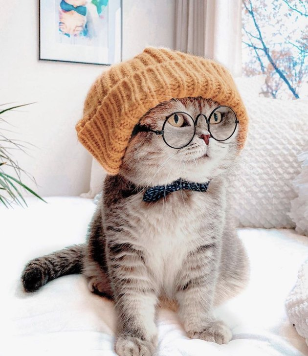 cat in knit hat