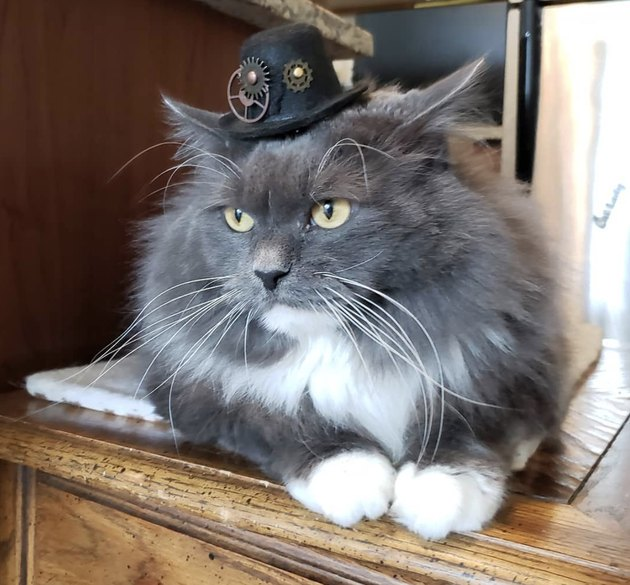 cat in steampunk hat