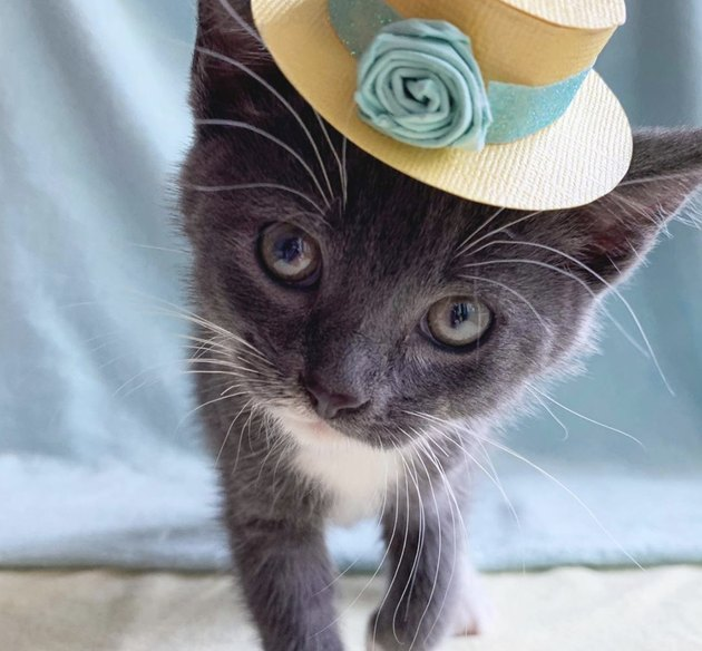 kitten in flower hat