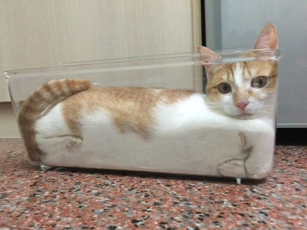 Cat sitting in glass loaf pan