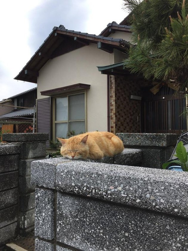 Cat sitting in loaf shape on a garden wall