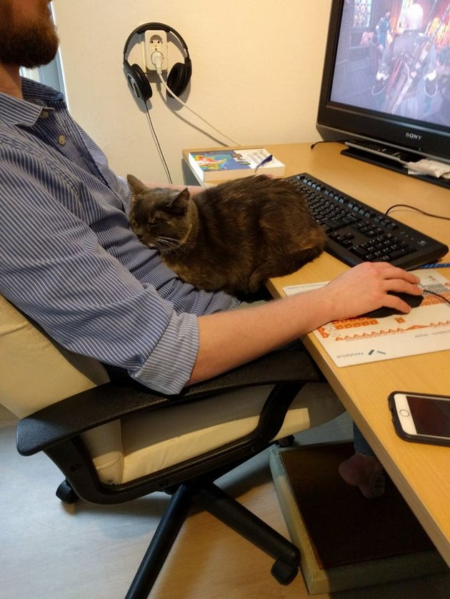 Cat in loaf shape sitting on desk while person works at computer