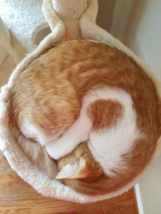 Cat curled in a circle