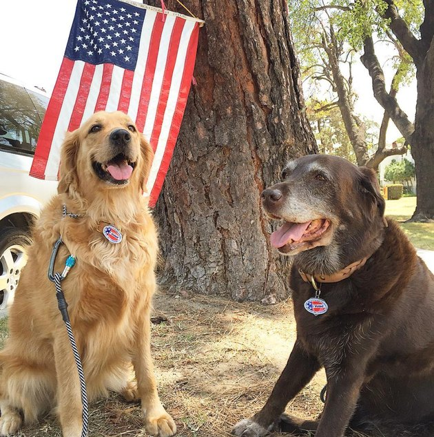 two dogs in front of american flag with i voted stickers