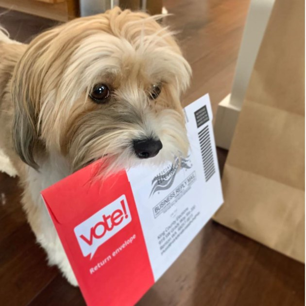 dog holding ballot in its mouth