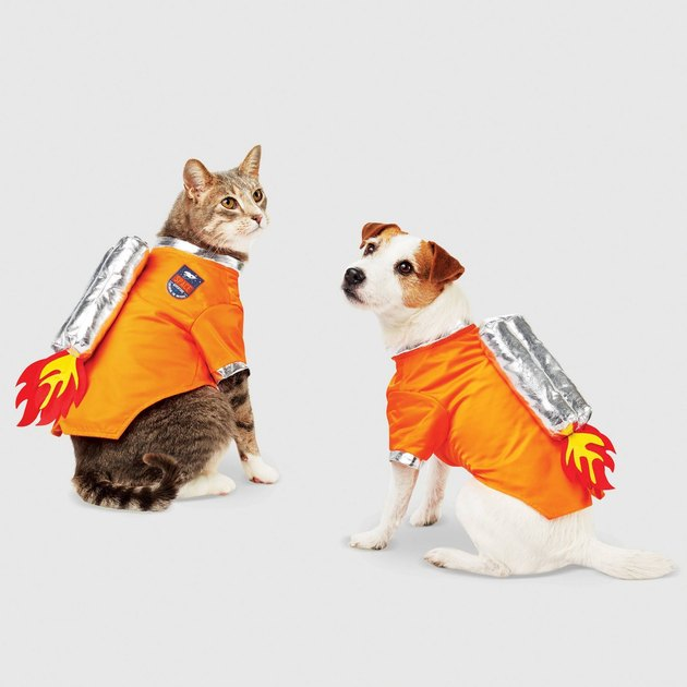 cat and dog astronaut costume