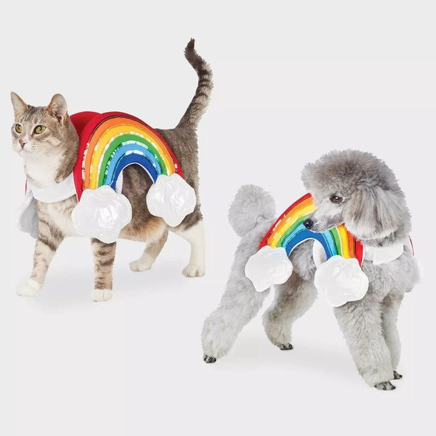 rainbow costume for cats and dogs