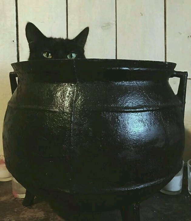 black cat sits in black cauldron