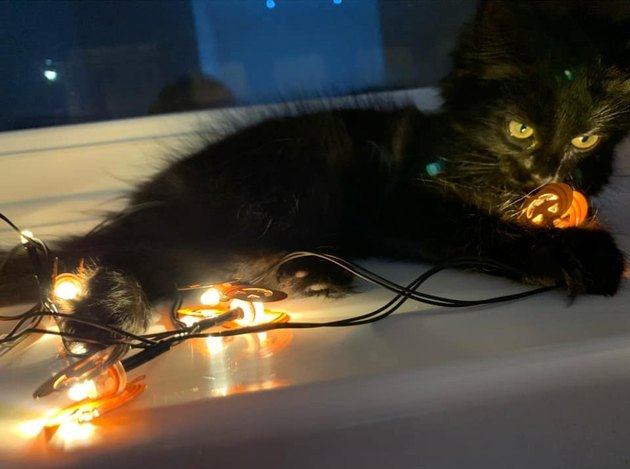 black cat sits on Halloween lights