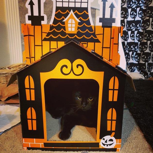 black cat sleeping in haunted house