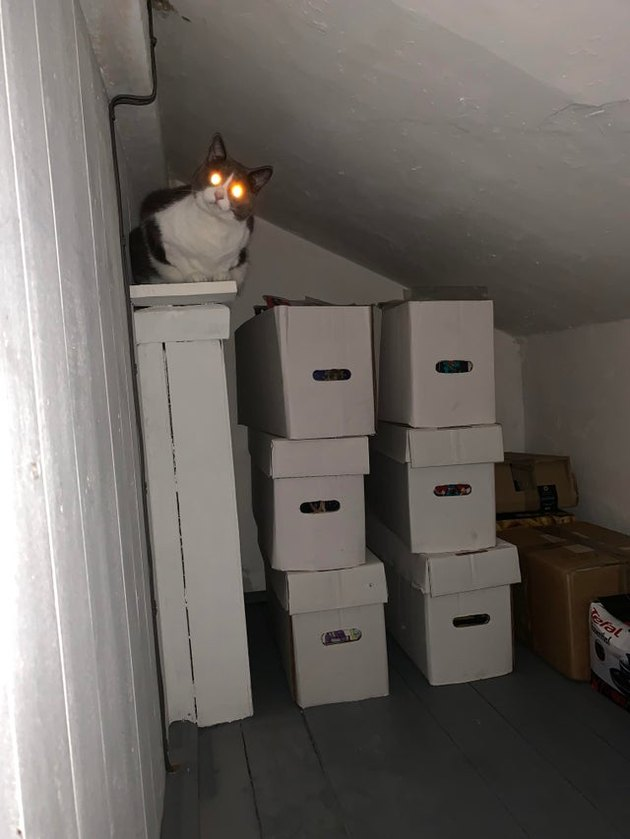 Cat with glowing eyes sitting on boxes