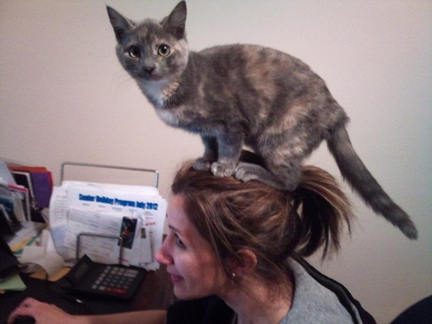 Kitten standing on human's head