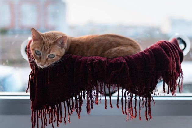 tabby cat lying in a hammock attached to the window, turns its neck to looks at the camera