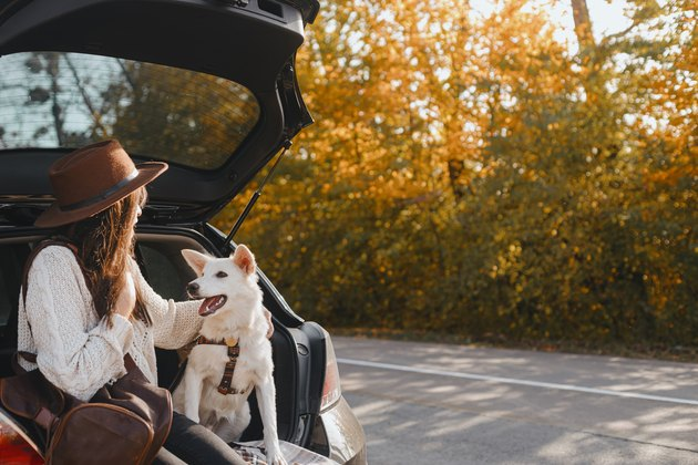 Woman sitting with white dog in car trunk and looking at sunny autumn trees. Road trip with pet