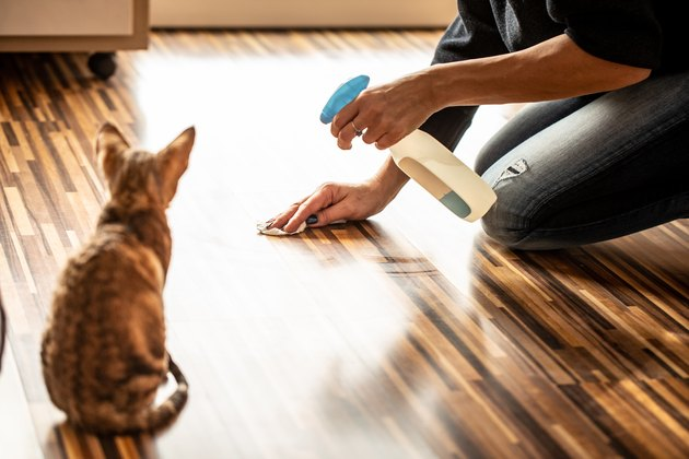 Rear View of Kitten Watching Owner Cleaning Floor - stock photo