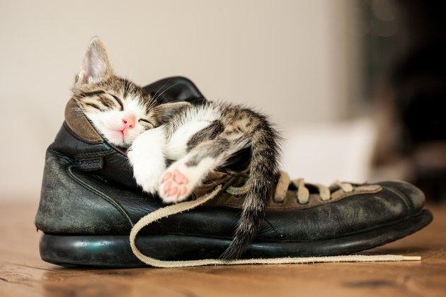 tiny kitten asleep inside a boot