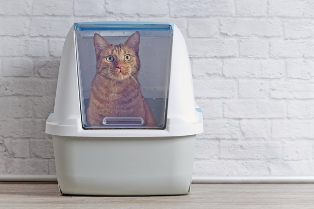 Cute ginger cat sitting in closed litter box and looking curious up to the camera.