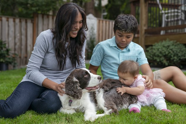 A Beautiful Eurasian Mother and Two Children Playing with Pet Dog