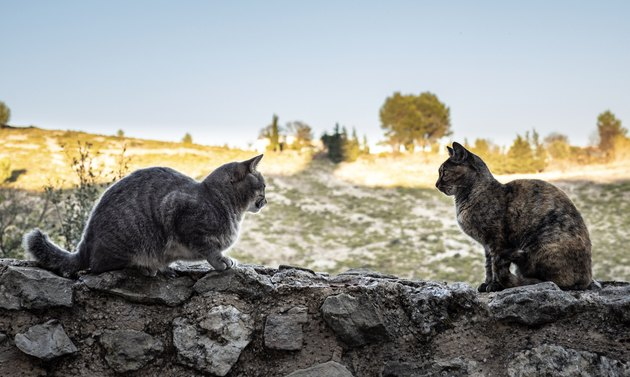 Two stray cats sitting on the wall of a wall on the street.