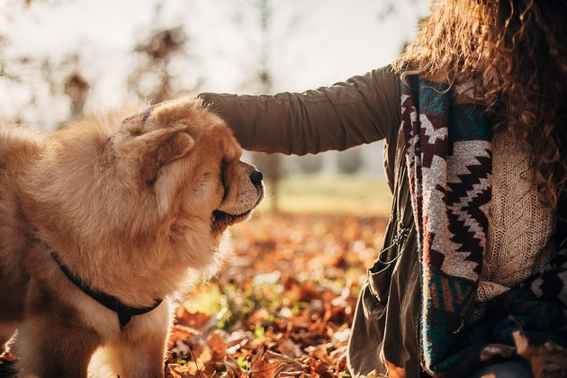 One woman cuddling with her dog outdoors in autumn park