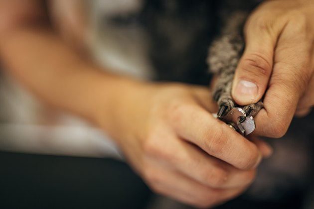 Close up of dog groomer cutting nails on a poodle
