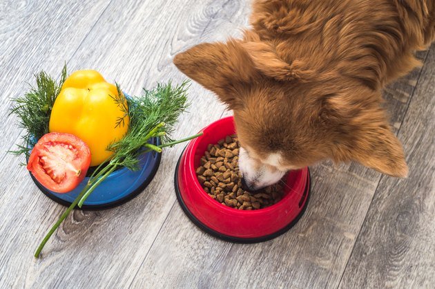 dog eats dry food. Next to it is a bowl of fresh vegetables. Dog food concept