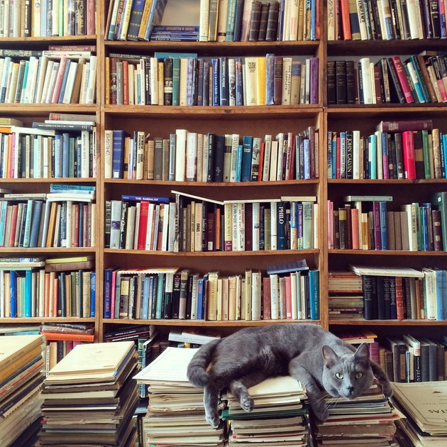 Cat Resting On Books In Library with many books in background
