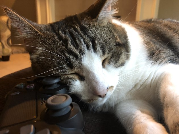 Cat Sleeping on Video Game Controller