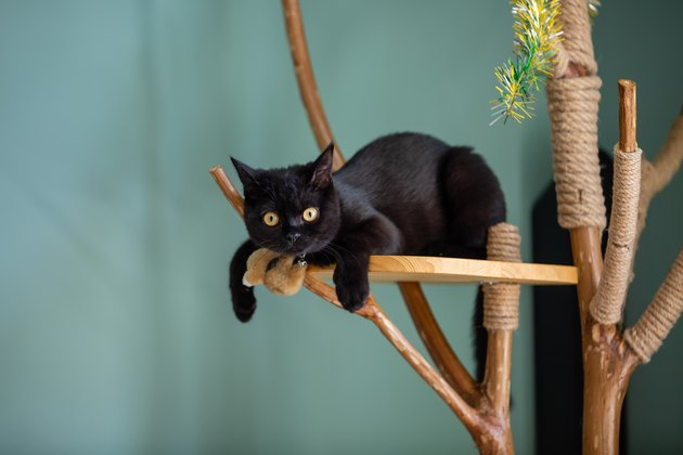 Black cat on a hand made cat tree