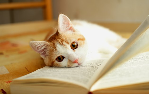 Red and white kitten with head in a book
