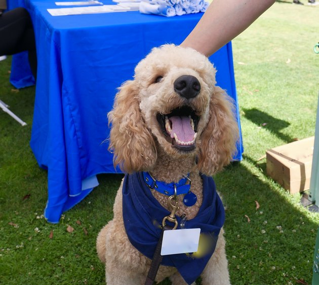 Therapy Assistance Dog accepts petting