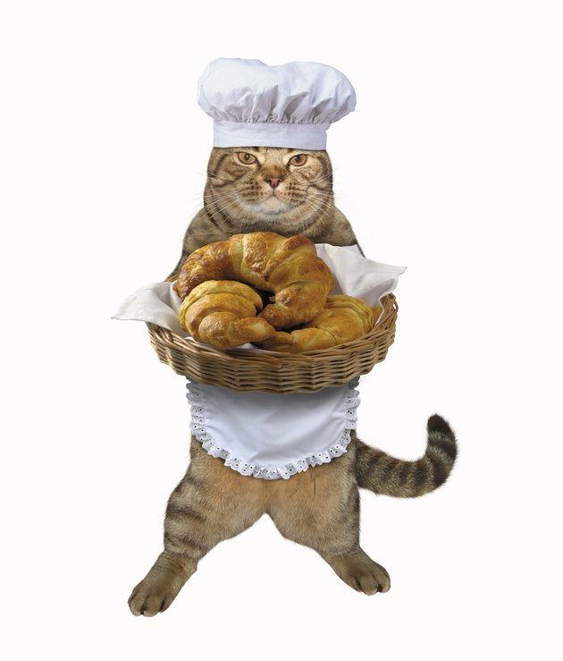 Cat cook with croissants