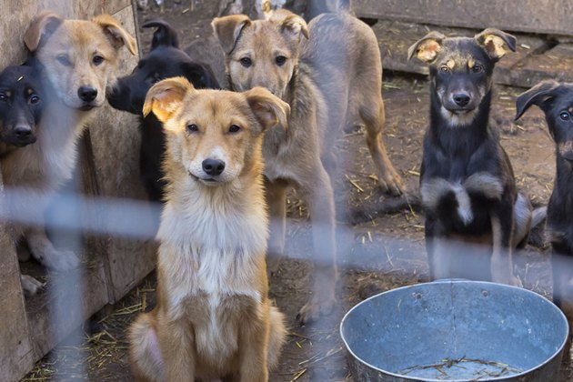 How Animal Hoarding Affects A Dog's Behavior