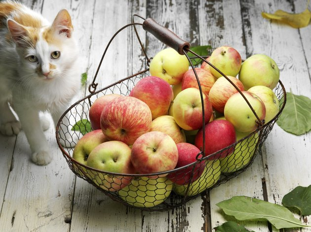 cat with apples