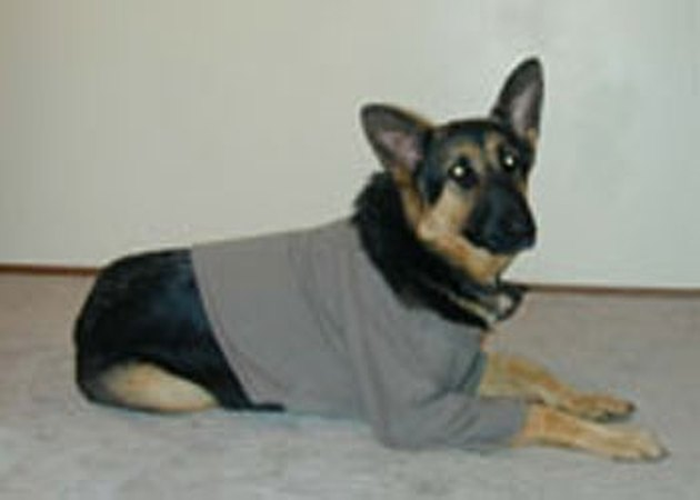 How to Make a Dog Sweatshirt