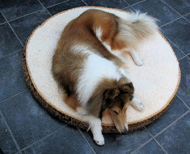 Dog on Dog Bed
