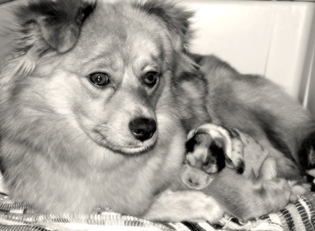mother dog with puppy