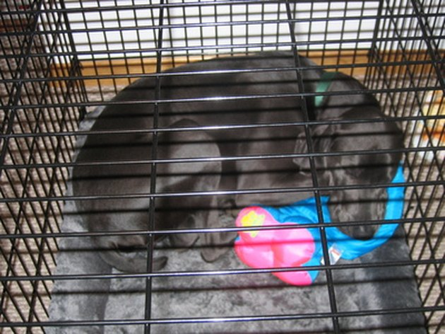 dog sleeping in a crate