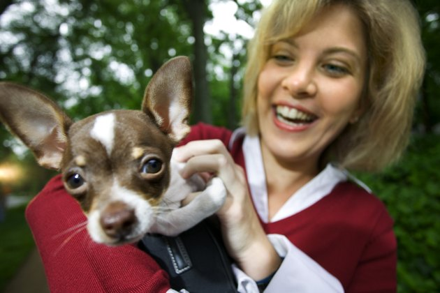 Woman holding pet chihuahua