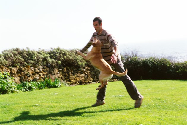 Young man playing with a dog in a lawn