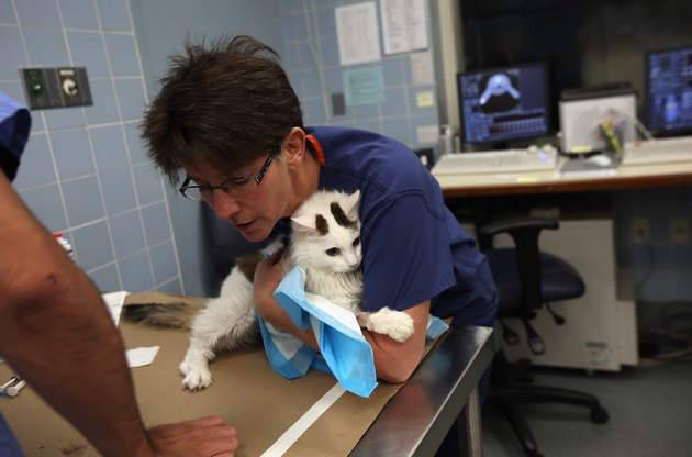 New York's Animal Medical Center Provides Advanced Treatments For Pets