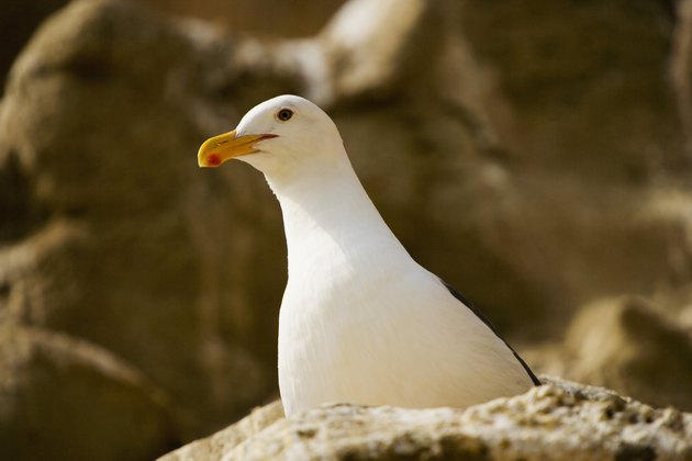 Low angle view of a seagull, La Jolla, California, USA