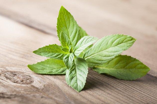 Fresh green mint