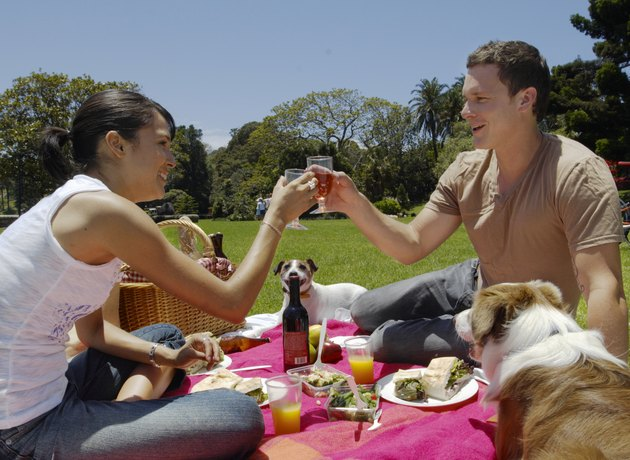 Young couple having picnic in park with border collie and jack russell