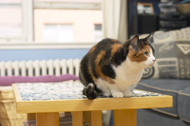 Cat sitting on table indoors
