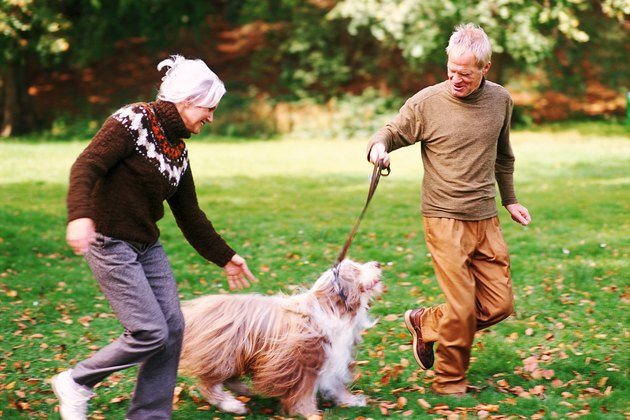 Older Couple Playing with Dog